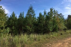 Jackson Bridlepath Road Timber & Hunting Investment - Clarke County AL