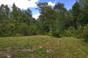 North Coffeeville Recreational Tract - Clarke County AL