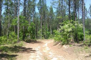 Coffeeville Timber and Recreational Investment - Clarke County AL