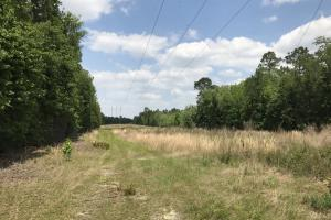 Coffee County, GA Hunting Land - Coffee County GA