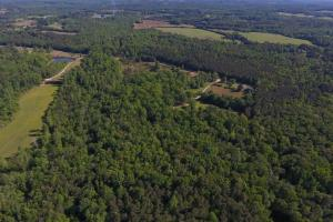 Timber, Pasture, and Hunting Opportunity - Tuscaloosa County AL