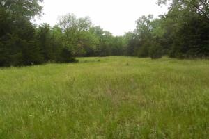 <p>More open areas to enjoy or for hunting.</p>