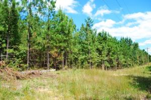 Plum Branch Recreational Homesite - McCormick County SC