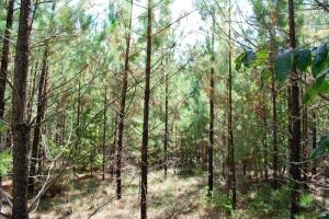 <p>sc land for sale, recreational land for sale, homesite for sale</p>