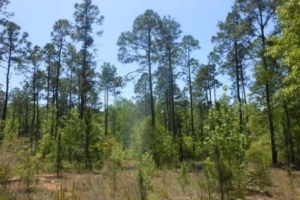 Timber Investment & Recreational Tract