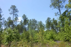 <p>timber investment al, recreational land for sale al</p>