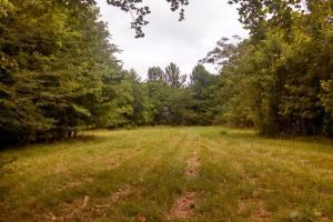 Hunting and Timber Investment - Lowndes County AL