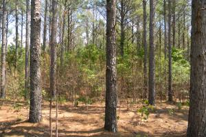 County Road 15 Timber & Hunting Tract - Chilton County AL