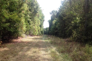 Woodstock Recreational Homesite - Bibb County AL