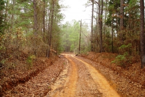 Hunting Homesite - Greene County AL