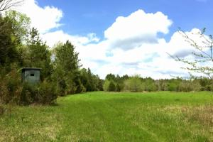 al hunting land for sale, alabama timberland (2 of 27)