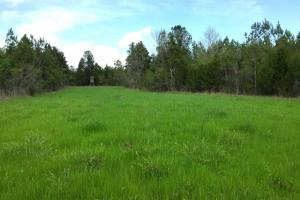 al hunting land for sale, alabama timberland (12 of 27)