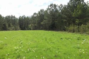 al hunting land for sale, alabama timberland (16 of 27)