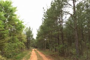 al hunting land for sale, alabama timberland (15 of 27)