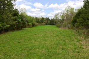 al hunting land for sale, alabama timberland (6 of 27)