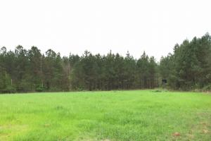 al hunting land for sale, alabama timberland (21 of 27)