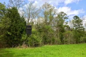 al hunting land for sale, alabama timberland (8 of 27)