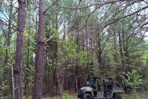 al hunting land for sale, alabama timberland (7 of 27)