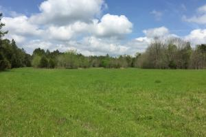 al hunting land for sale, alabama timberland (3 of 27)
