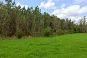 al hunting land for sale, alabama timberland (10 of 27)