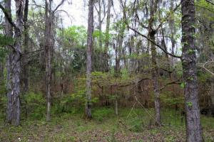 al hunting land for sale, alabama timberland (9 of 27)