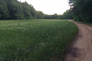 Usry Pearl River Hunting Land - Simpson County MS