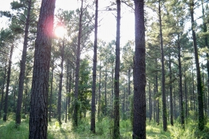 al hunting land for sale, timber investment alabama (4 of 11)