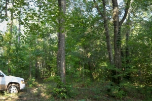 al hunting land for sale, timber investment alabama (5 of 11)