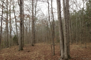 al hunting land for sale, timber investment alabama (9 of 11)