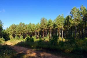 alabama recreational tract for sale, timber investment al (3 of 13)