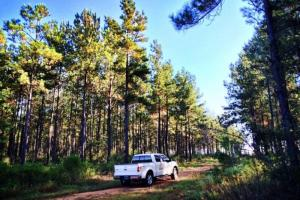 alabama recreational tract for sale, timber investment al (2 of 13)