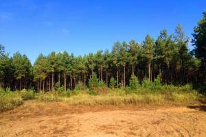 alabama recreational tract for sale, timber investment al (6 of 13)