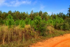 alabama recreational tract for sale, timber investment al (4 of 13)
