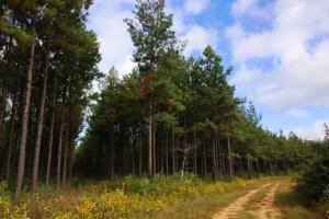 alabama recreational tract for sale, timber investment al (5 of 13)
