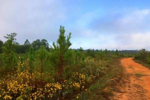 alabama recreational tract for sale, timber investment al (9 of 13)