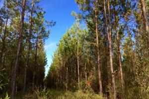 alabama recreational tract for sale, timber investment al (7 of 13)