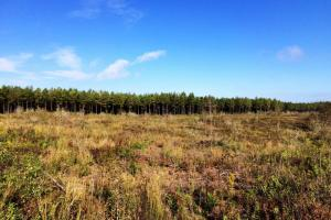 alabama recreational tract for sale, timber investment al (8 of 13)