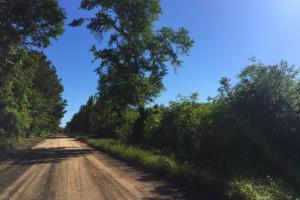 Una Road Investment Tract - Darlington County SC
