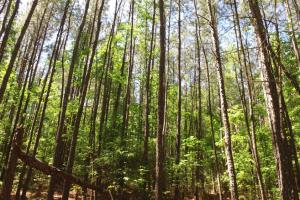 Hwy 25 Recreational/Timber Homesite - Edgefield County SC