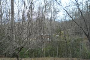 <p>Apple tree next to cabin.</p>