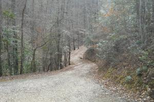 <p>Road to one of the build sites; also alternate driveway to the cabin.</p>