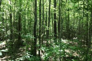 Cargile Road Hunting, Recreation, & Homesite - Fayette County AL