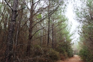 land for sale in al,hunting land for sale in al, timber land for sale in al (2 of 10)