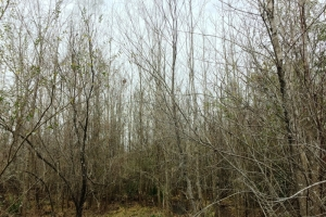 land for sale in al,hunting land for sale in al, timber land for sale in al (9 of 10)