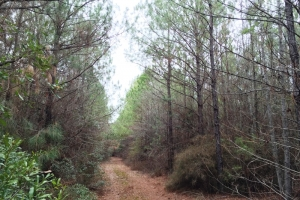 land for sale in al,hunting land for sale in al, timber land for sale in al (10 of 10)