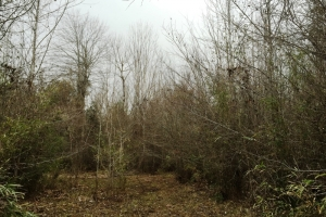 land for sale in al,hunting land for sale in al, timber land for sale in al (8 of 10)