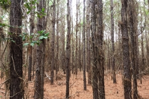 land for sale in al,hunting land for sale in al, timber land for sale in al (5 of 10)