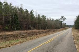 land for sale in al,hunting land for sale in al, timber land for sale in al (4 of 10)