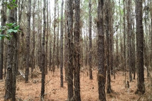 land for sale in al,hunting land for sale in al, timber land for sale in al (6 of 10)