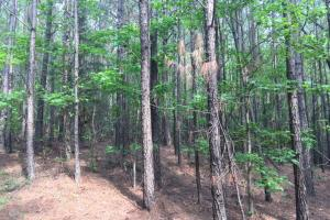 Renfrow Road Hunting Tract - Franklin County AL